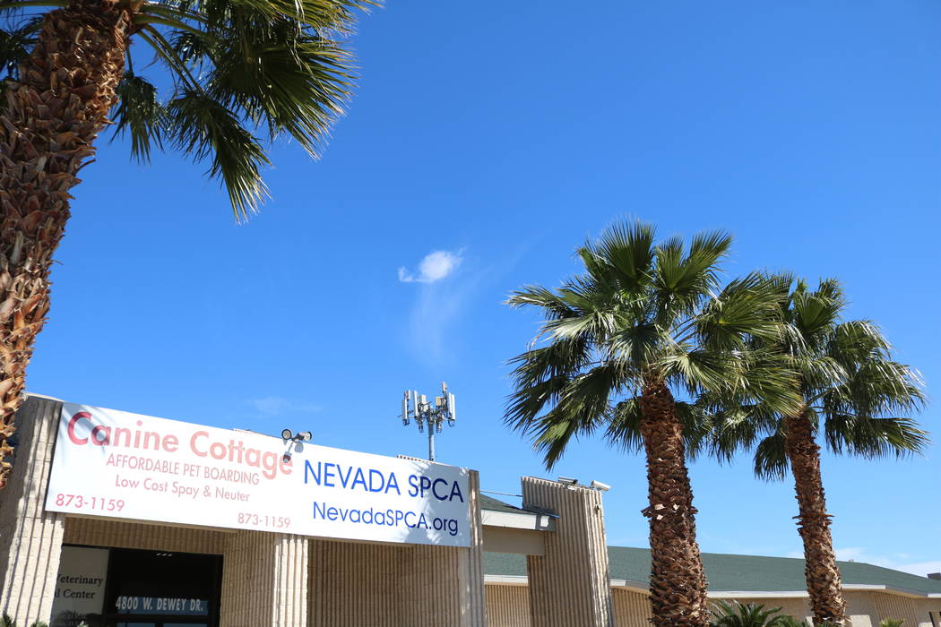 The NSPCA shelter at 4800 W. Dewey Dr. in Las Vegas on Monday, March 12, 2018. The NSPCA is competing in an online voting competition for a $5,000 grand prize called Tournament of Tails. (Madelyn  ...