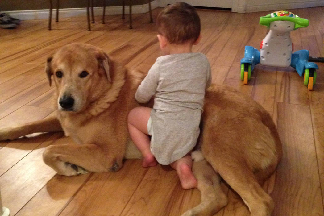 Moto, a golden retriever, is shown in this undated photo with Hayden Roebuck, 1, the grandson of Moto's owner, Maureen Schorn. Moto was shot and killed Friday, March 9, 2018, by an off-duty ...