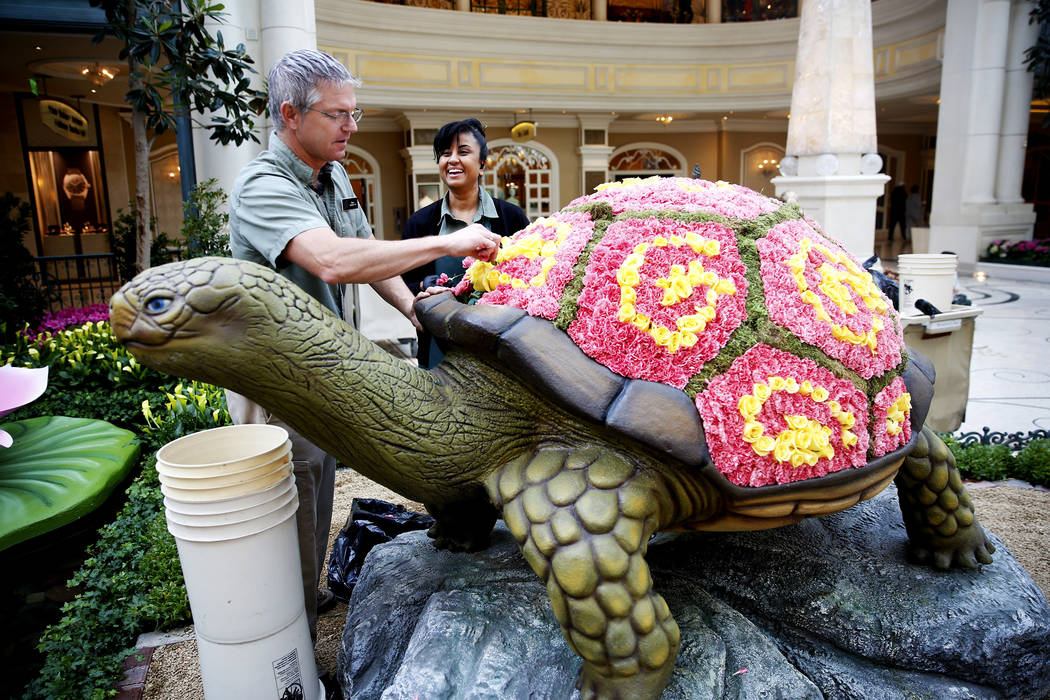 Gardeners Travis Edwards and Sharon, who did not wish to include her last name, replace flowers on a new spring display at the Bellagio Conservatory in Las Vegas on Thursday, March 15, 2018. Andre ...