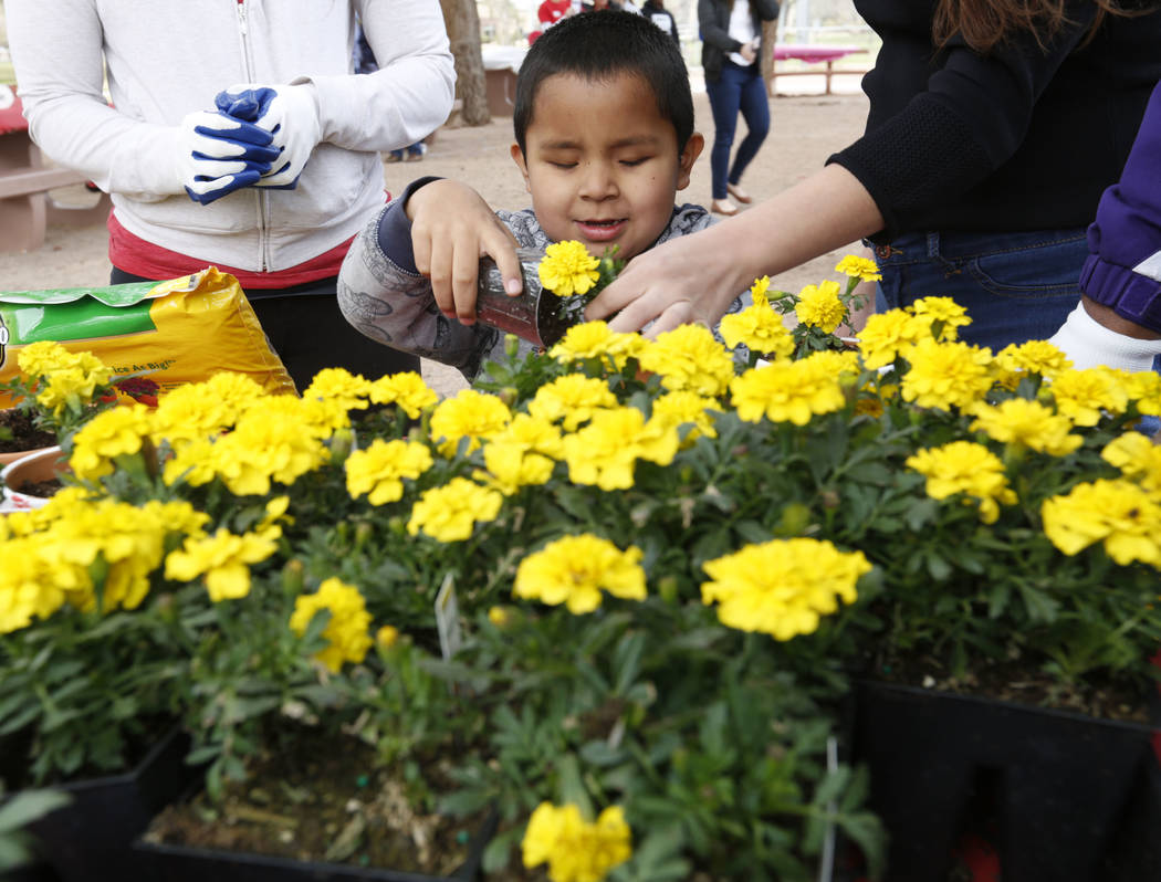 Las Vegas resident Alexis Tolentino Rodriguez, 7, who is blind, plants a flower before the Beepin' Egg Hunt at Sunset Park in Las Vegas, Saturday, March 24, 2018. Nevada Blind Children's Foundatio ...