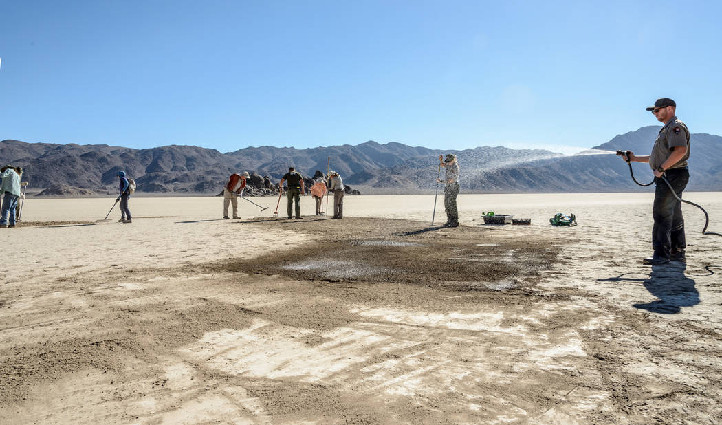 "Volunteers use rakes and water to erase tire tracks from Racetrack Playa, a dry lake in Death Valley National Park famous for its mysterious ""moving"" stones but off limits to vehicles. National Pa ..."