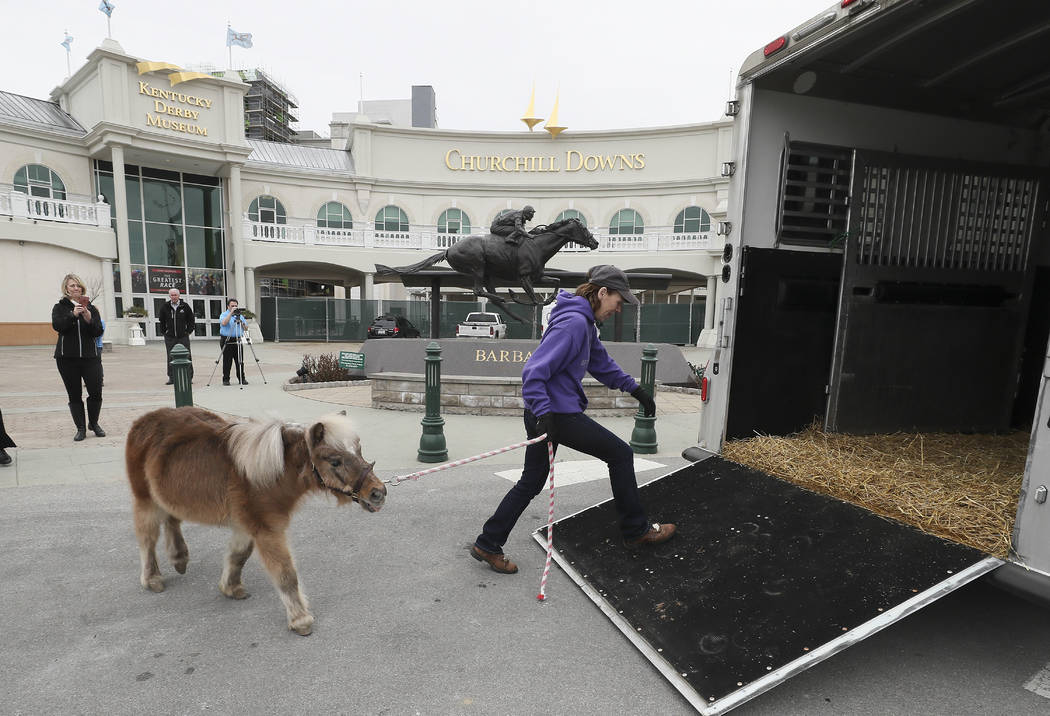 Kentucky Derby Museum equine manager Alison Knight leads Winston, a miniature horse who has been a resident of the museum for 22 years, to a horse van in Louisville, Ky., March 5, 2018. Winston ha ...