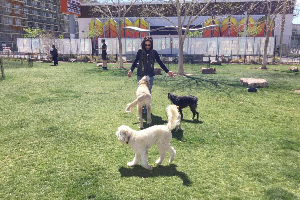 Cathy Brooks, owner of the Hydrant Club greets dogs on Wednesday, March 14, 2018. at the club's dog park located at 109 N 9th St in downtown Las Vegas. The Hydrant Club is an education facility th ...