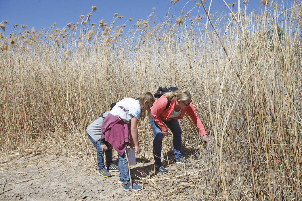 Kim Cooper, center, shows her children Ellis Dokken, 7, and Georgette Dokken, 11, where to look for ladybugs as part of the Young Explorers program at the Clark County Wetlands Park in Las Vegas,  ...