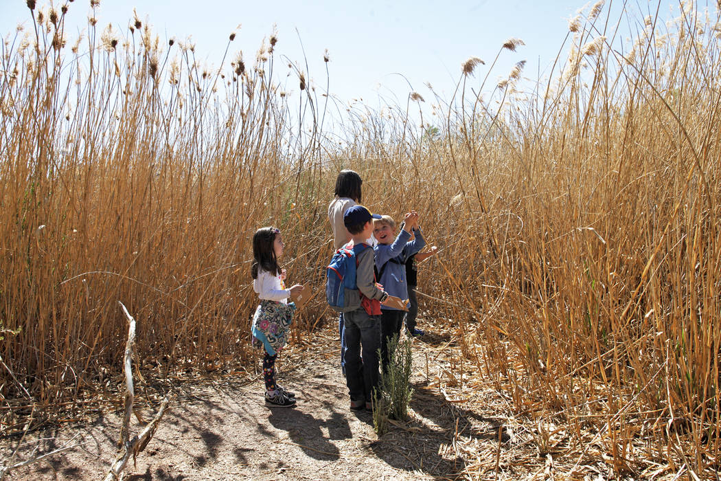Sophia Barnes, 6, from left, Whitman Taylor, 8, and Bodhi Brouillet, 7, look for ladybugs as part of the Young Explorers program at the Clark County Wetlands Park in Las Vegas, Sunday, March 25, 2 ...