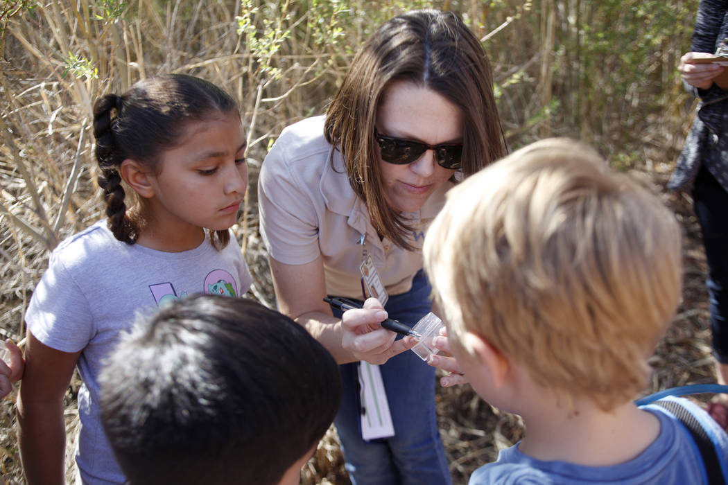 Recreation Assistant Alice Hulslander shows a ladybug she caught to Roxy Ramirez, 8, from left, Jesse Camacho, 6, and Bodhi Brouillet, 7, as part of the Young Explorers program at the Clark County ...