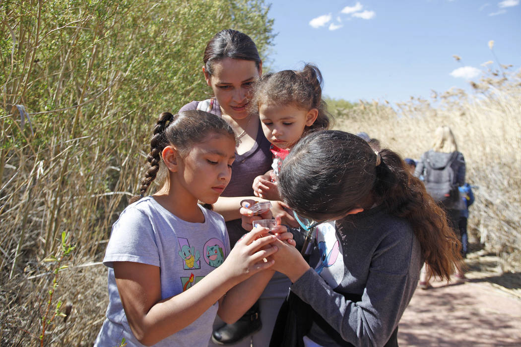 Roxy Ramirez, 8, from left, her mother Zoe Ramirez, sister Allyson Ramirez, 2, and sister Dalyla Ramirez, 10, check out a captured ladybug during the Young Explorers program at the Clark County We ...