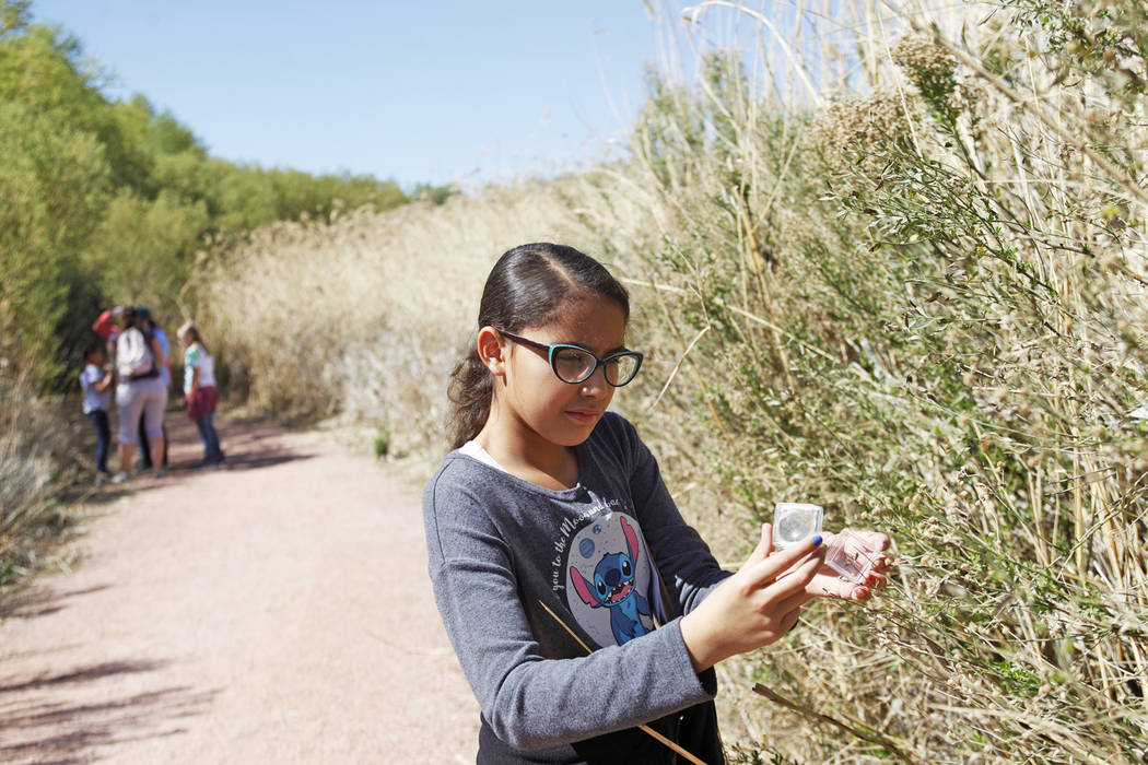 Dalyla Ramirez, 10, lets a ladybug go during the Young Explorers program at the Clark County Wetlands Park in Las Vegas, Sunday, March 25, 2018. (Rachel Aston Las Vegas Review-Journal @rookie__rae)