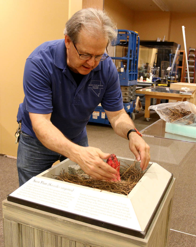 "Nevada State Museum Exhibits Manager Tom Dyer works on a display that will be part of a traveling exhibit dedicated to the explorer John C. Fremont Wednesday, March 14, 2018. The ""Finding Fre ..."