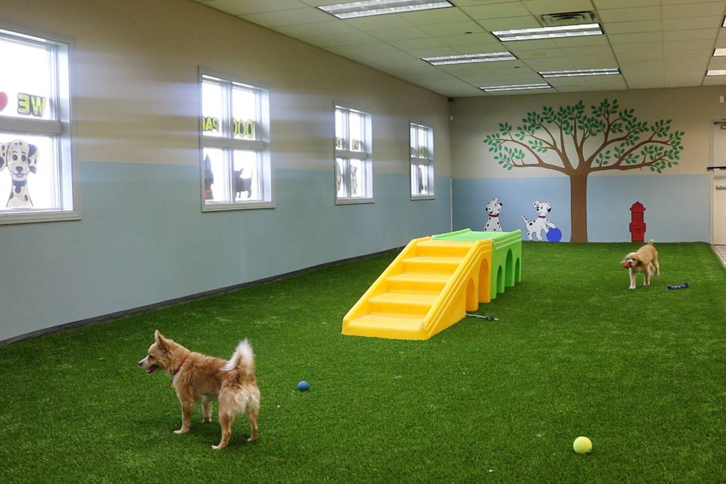Adventure Dog Park, located at 2435 E. Warm Springs Rd., is a new indoor dog park in Las Vegas. Rochelle Richards Las Vegas Review-Journal @RoRichards24