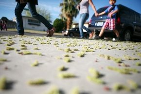 Parents walk students to school passing mulberry tree pollen that litters the sidewalk on the corner of West Providence Lane and South Essex Drive near Griffith Elementary School Tuesday in Las Ve ...