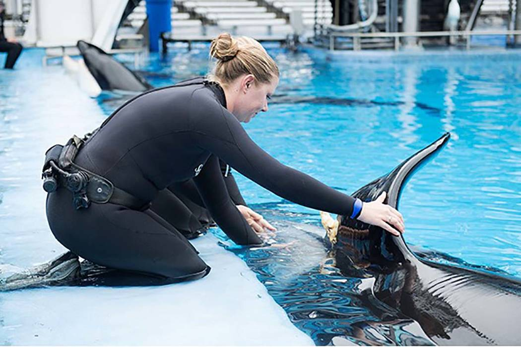 SeaWorld posted a photo of a trainer and an orca on its Facebook page on March 31 announcing that Katina, the matriarch of the SeaWorld Orlando orca pod, had been injured on March 17. (SeaWorld)