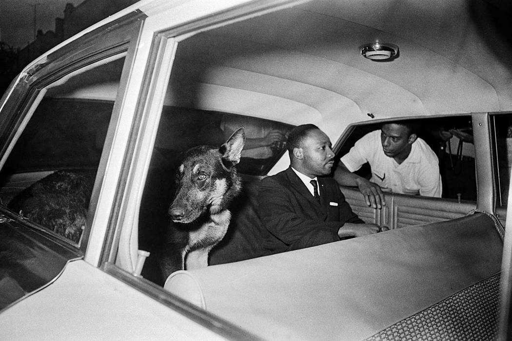 FILE - In this June 12, 1964 file photo, the Rev. Dr. Martin Luther King, Jr. speaks to Andrew Young as King rides in the back seat of a police car with a police dog as he is returned to jail in S ...