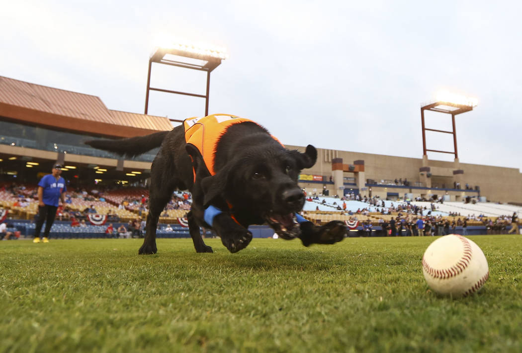 Las Vegas 51s bat dog Finn goes after a baseball before the start of the opening day game between the Las Vegas 51s and El Paso Chihuahuas at Cashman Field in Las Vegas on Thursday, April 5, 2018. ...