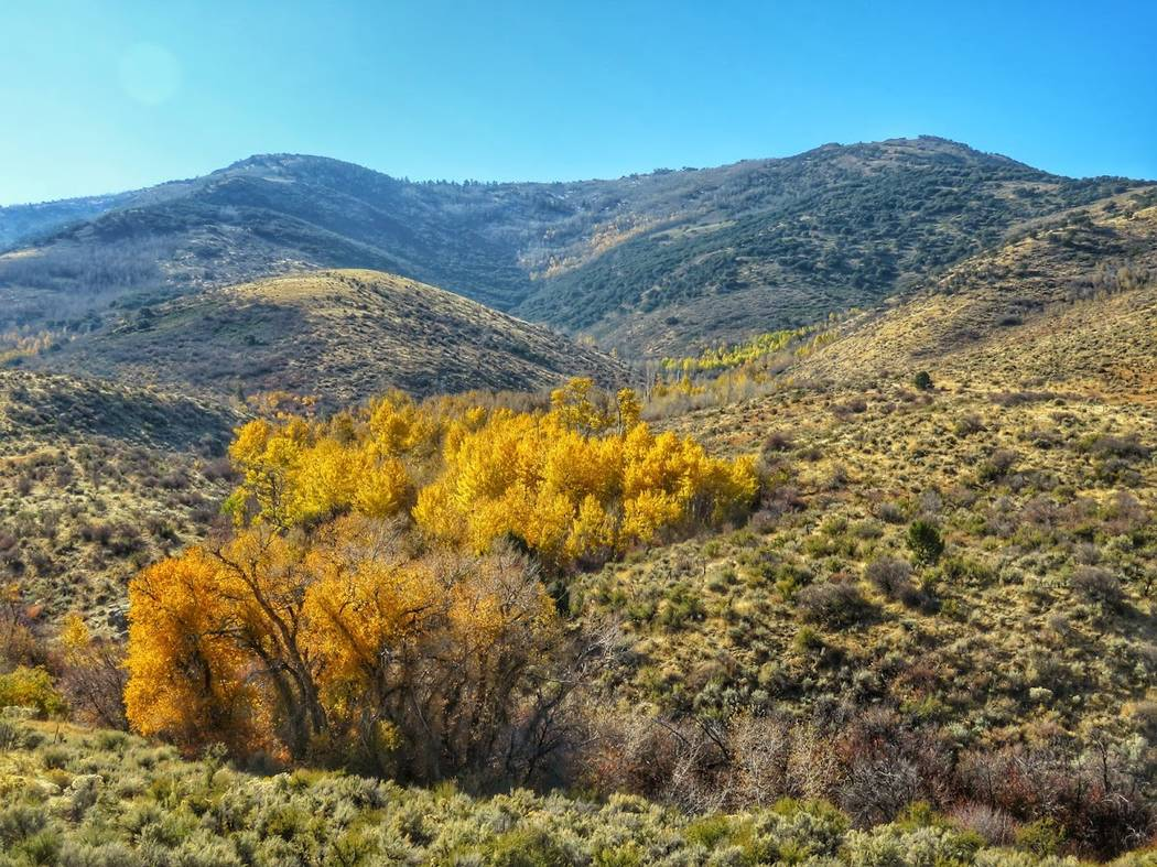 Fall leaves color the Ruby Mountains of Northern Nevada, where the U.S. Forest Service is studying whether 54,000 acres should be opened up for oil and gas exploration. Patrick Donnelly/Center for ...