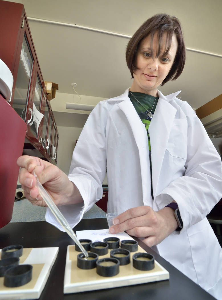 Postdoctoral researcher Rachel Johnsen is shown preparing samples at UNLV at 4505 S. Maryland Parkway in Las Vegas on Friday, April 13, 2018. She is working in the cryptotephra lab, which is dedic ...