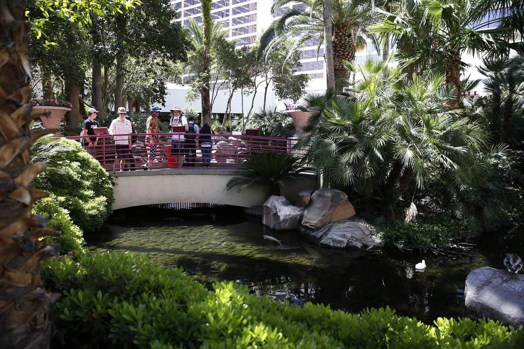 The Flamingo Wildlife Habitat at the Flmaingo casino-hotel in Las Vegas, Thursday, April 19, 2018. Erik Verduzco Las Vegas Review-Journal @Erik_Verduzco