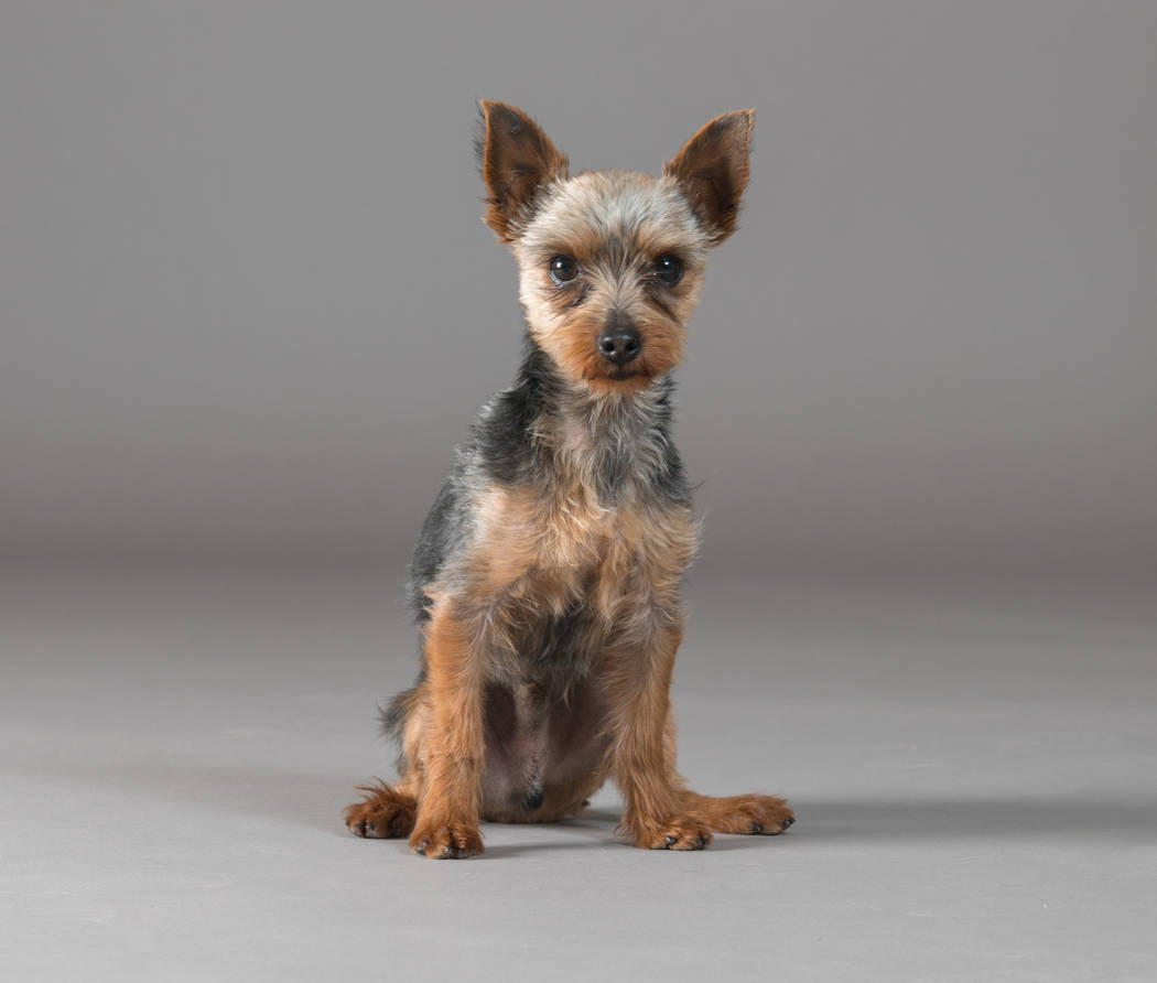 Waldo will compete in the Animal Foundation's Best in Show event. Bark Gallery
