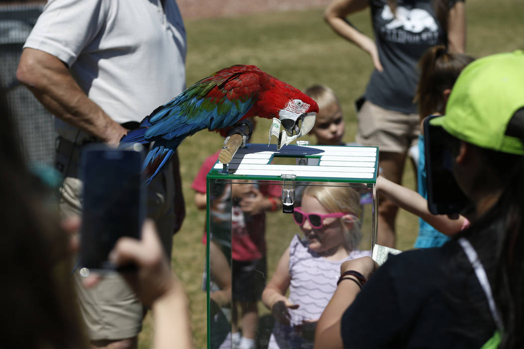 A green-winged macaw collects donations for The Condor Fund after a bird show by Joe Krathwohl, The Birdman, at the Going Green Earth Day event at Huckleberry Park in Las Vegas, Saturday, April 21 ...