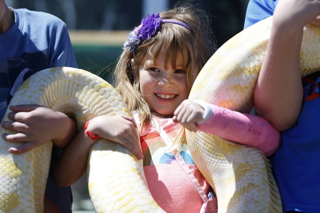 Grace Holloway, 6, holds a Burmese Python during a show at the Going Green Earth Day event at Huckleberry Park in Las Vegas, Saturday, April 21, 2018. Erik Verduzco Las Vegas Review-Journal @Erik_ ...