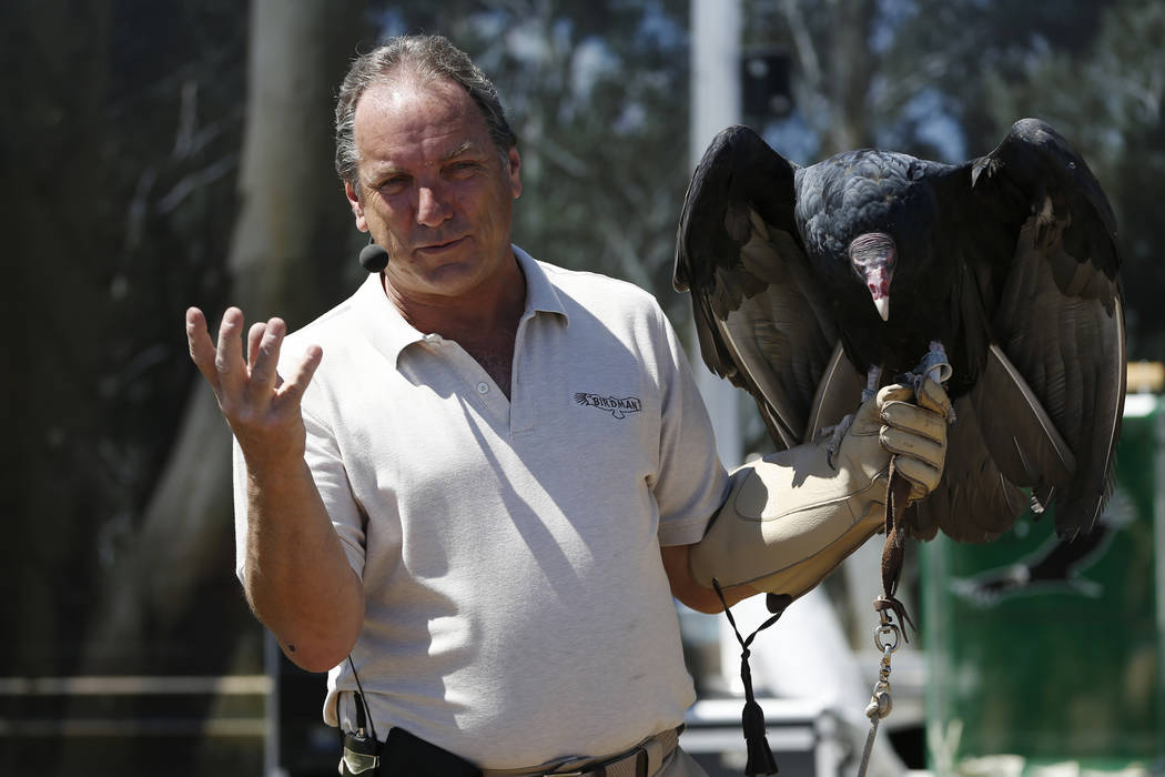 Joe Krathwohl, The Birdman, holds a turkey vulture during a show at the Going Green Earth Day event at Huckleberry Park in Las Vegas, Saturday, April 21, 2018. Erik Verduzco Las Vegas Review-Journ ...