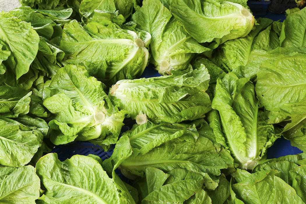 Romaine lettuce (Thinkstock)
