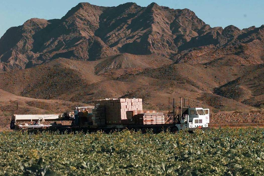 This Dec. 17, 1997, file photo, lettuce is harvested at a farm in Wellton, Arizona, east of Yuma. The Centers for Disease Control is expanding a warning about contaminated lettuce from Arizona tha ...
