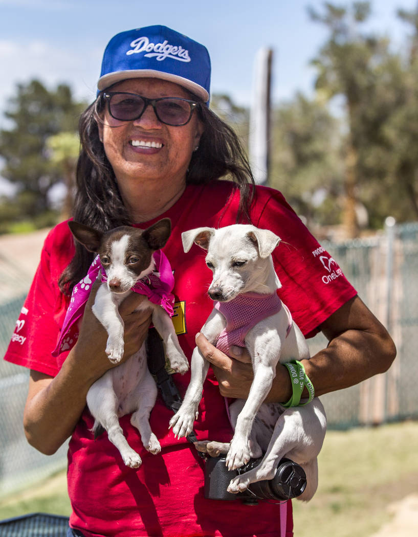Dinorah Arambula holds her two Chihuahuas, 3-month-old Peque and 6-month-old Chica, at Cashman Field in Las Vegas on Sunday, April 22, 2018. Patrick Connolly Las Vegas Review-Journal @PConnPie