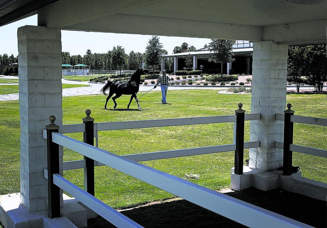 Horse trainer Alfred Ortega walks WN Dark Angel, a nine-year old mare, at Wayne Newton's Casa de Shenendoah Thursday, June 15, 2012. A Clark County District Court judge on Thursday allowed enterta ...