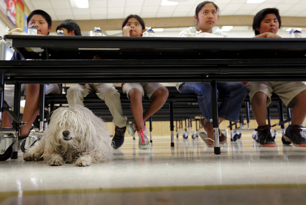 """Boy"" sits at the feet of his owners as students eat a free breakfast provided by San Marcos Elementary School Thursday, April 26, 2018, in Chandler, Ariz. Teachers in Arizona and Colora ..."