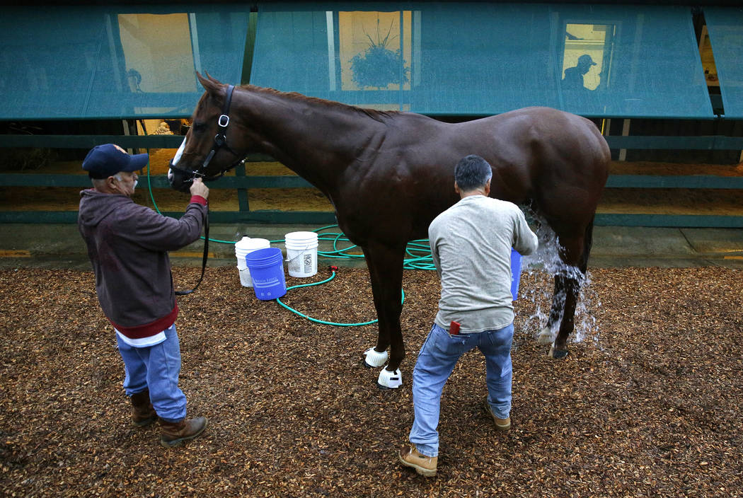 Kentucky Derby winner Justify is washed outside a barn, Friday, May 18, 2018, at Pimlico Race Course in Baltimore. The Preakness Stakes horse race is scheduled to take place Saturday, May 19. (AP ...