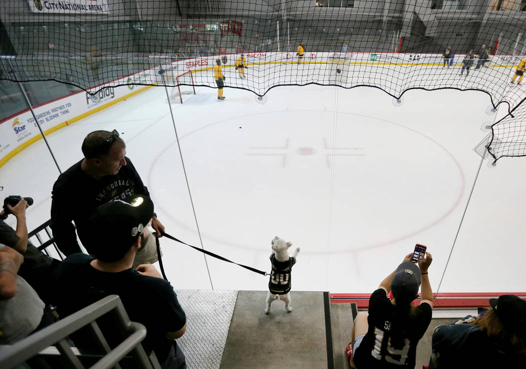 Bark-Andre Furry and his owner, Rick Williams, watch the Vegas Golden Knights practice at City National Arena in Las Vegas on Wednesday, May 9, 2018. K.M. Cannon Las Vegas Review-Journal @KMCannon ...