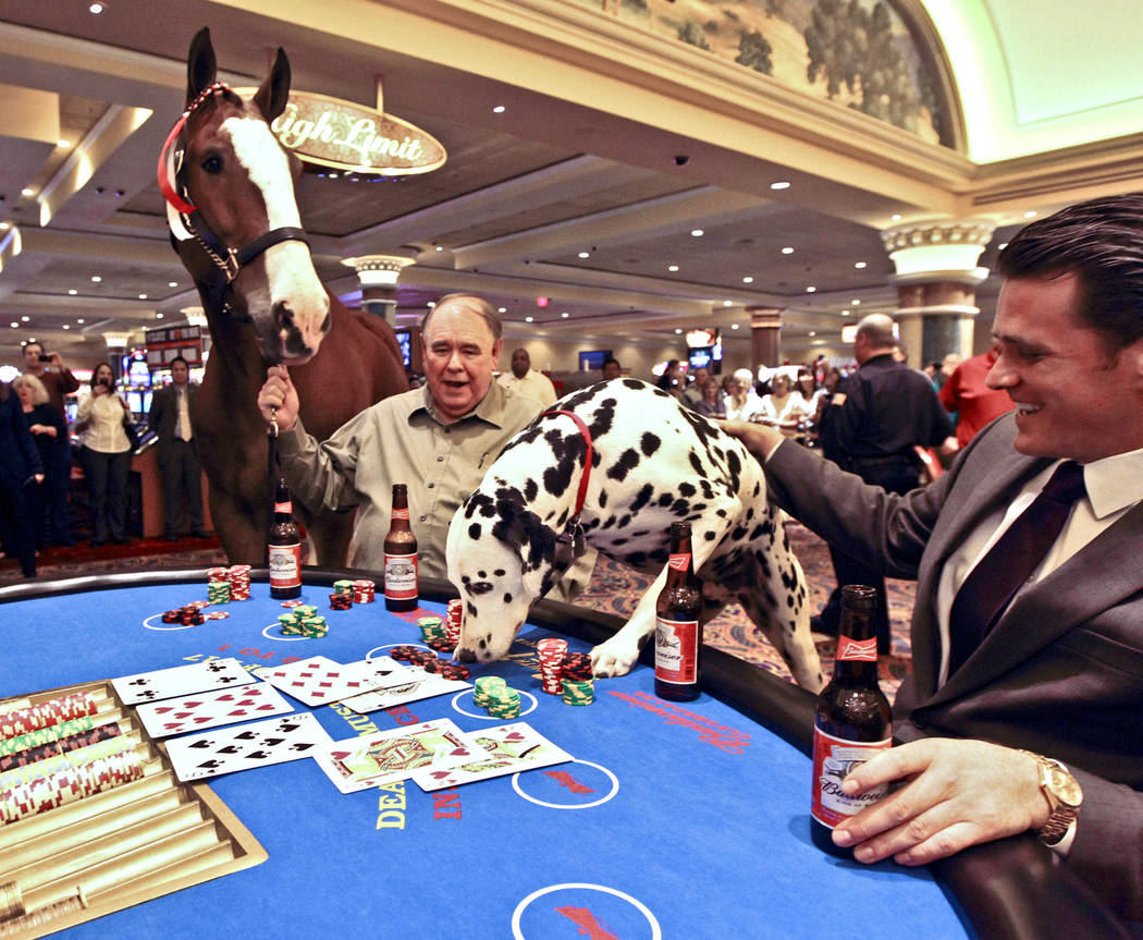 "Elite, a Budweiser Clydesdale horse, ""seems"" interested as King, a Budweiser Dalmatian, ""makes"" a bet during a blackjack game in the South Point hotel-casino in Las Vegas, Friday, Oct. 12, 2012. S ..."