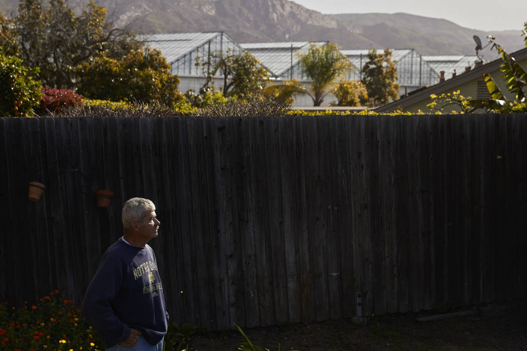 """In this Thursday, April 12, 2018, photo, Xave Saragosa pauses for photos in his backyard as greenhouses growing cannabis plants are visible in the background, in Carpinteria, Calif. """"We don't ..."""