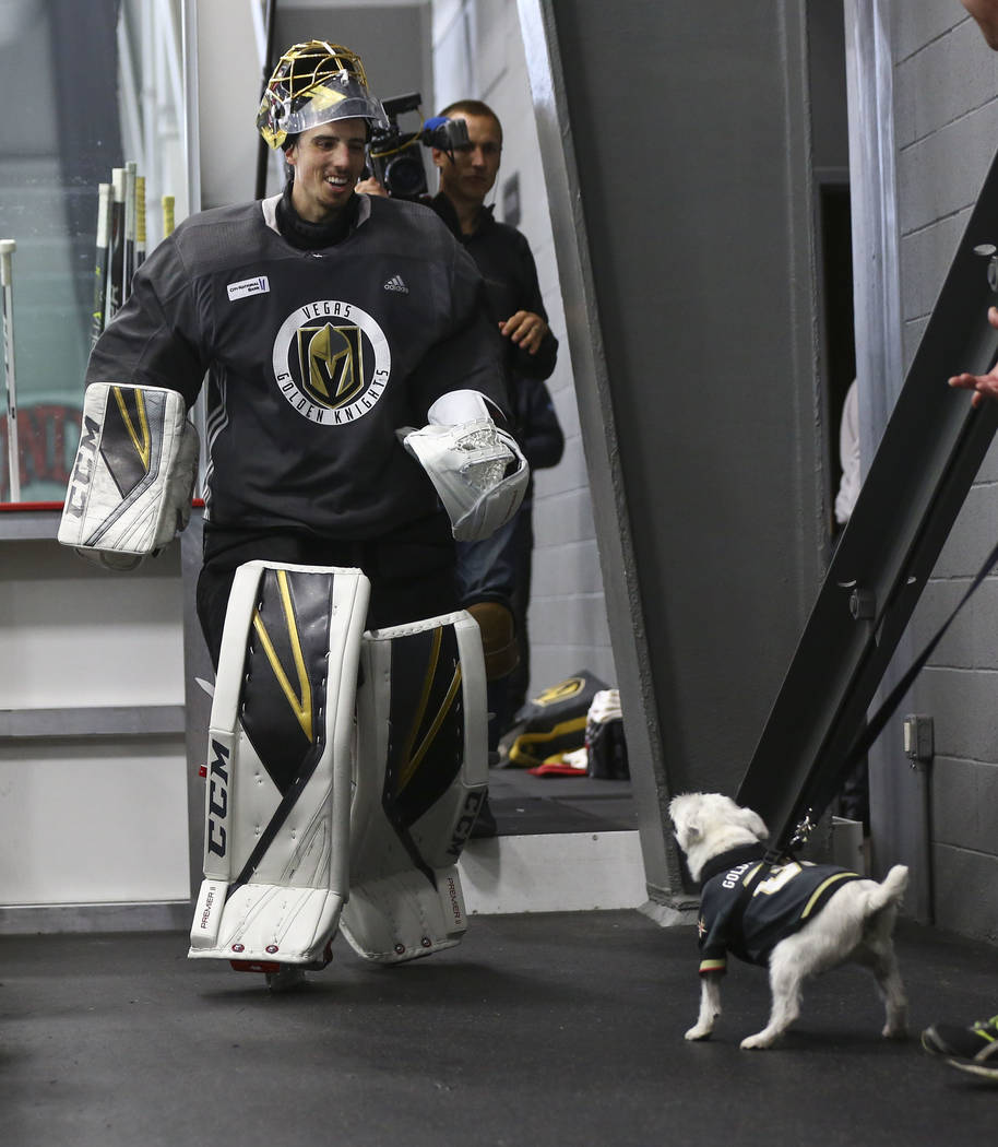 Golden Knights goaltender Marc-Andre Fleury meets Bark-Andre Furry, a Jack Russell terrier, after practice at City National Arena in Las Vegas on Thursday, May 10, 2018. Chase Stevens Las Vegas Re ...