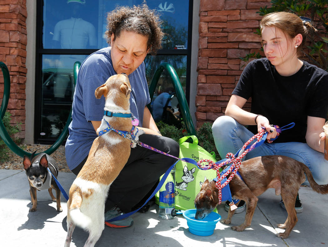 Jacque Krugman, left, of Las Vegas and her daughter Jenna Vallas, 16, give water to their foster Chihuahuas, Violet, from left, Nute and Groovey, during a dog adoption event at Peet's Coffee on Di ...