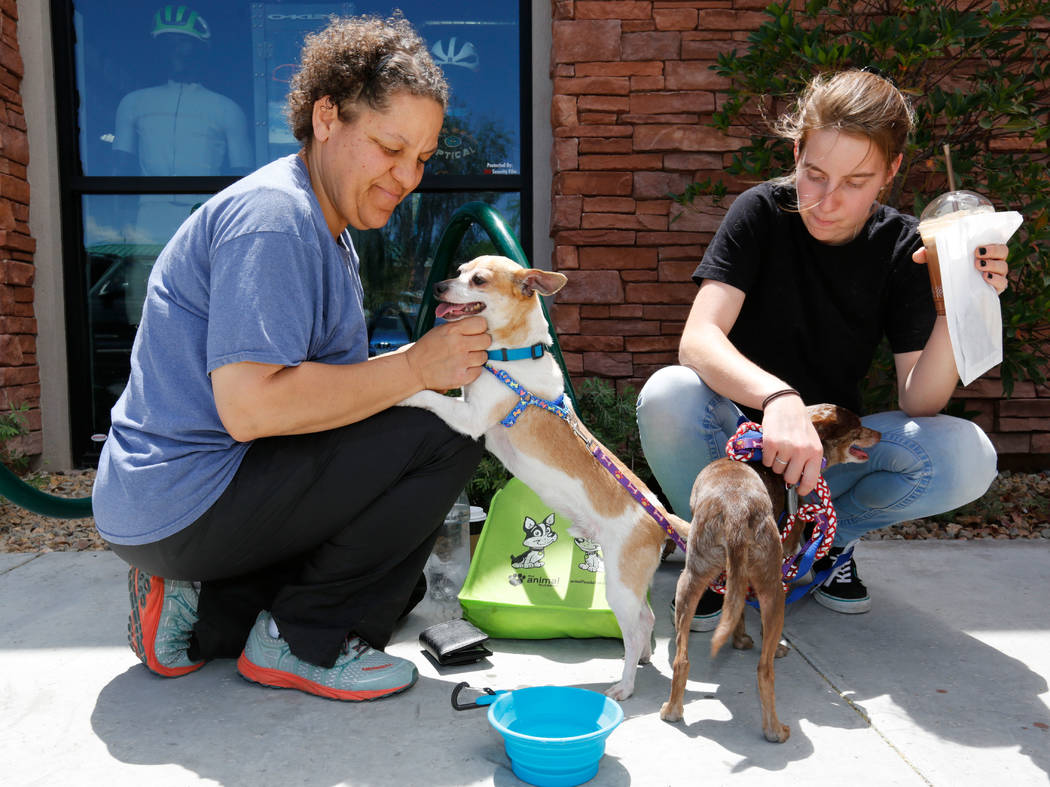 Jacque Krugman, left, of Las Vegas and her daughter Jenna Vallas, 16, give water to their foster Chihuahuas, Nute, left, and Groovey, during a dog adoption event at Peet's Coffee on Discovery Driv ...