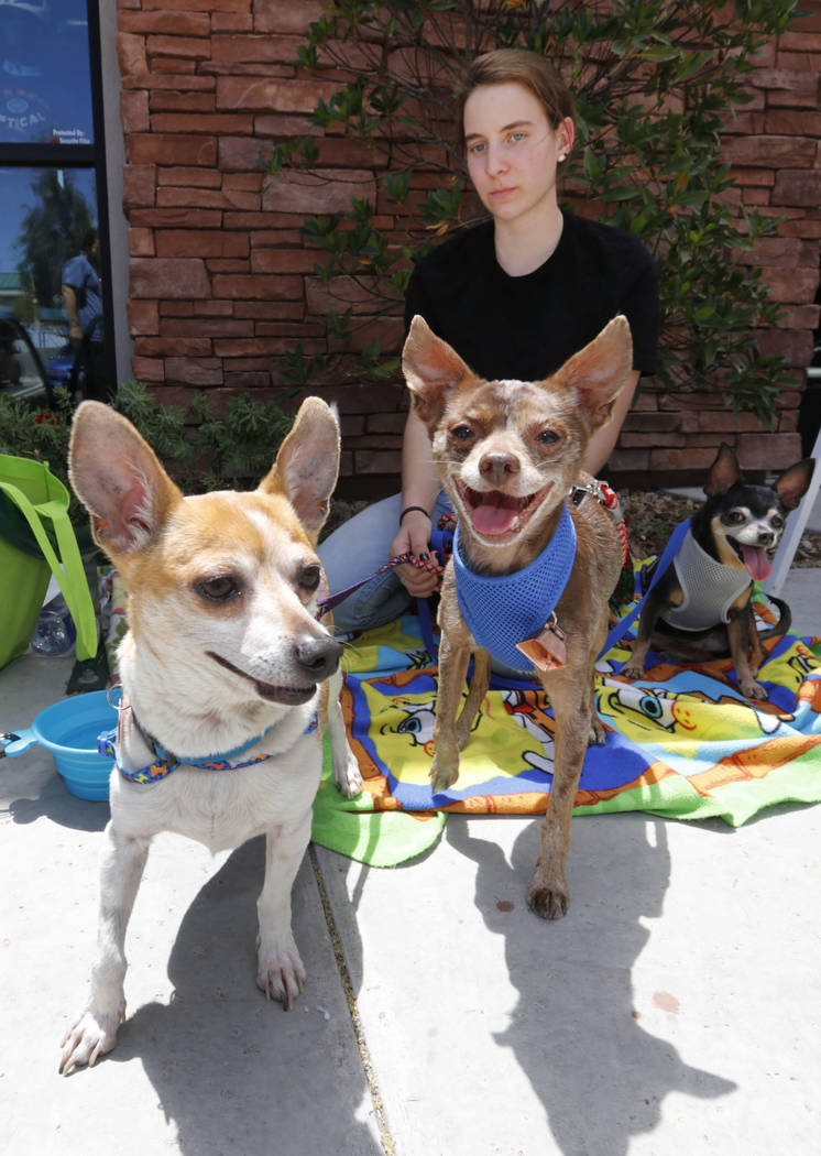Jenna Vallas, 16, of Las Vegas with her foster Chihuahuas, Nute, from left, Groovey and Violet during a dog adoption event at Peet's Coffee on Discovery Drive in Las Vegas, Sunday, May 13, 2018. P ...