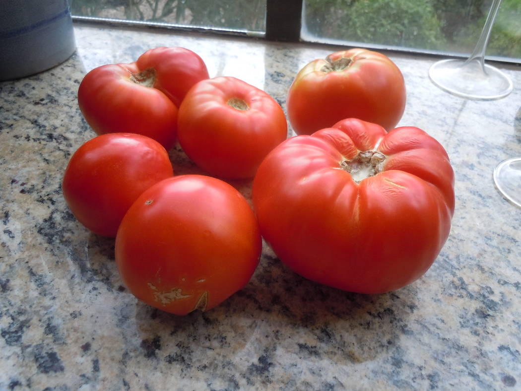 Bob Morris Celebrity tomatoes are smaller in size compared to beefsteak and have been solid performers in our climate for many years.