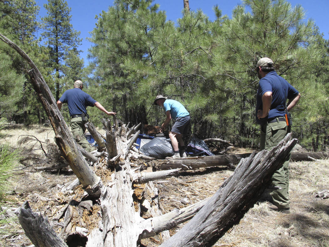 John Dobson, center, gets help from two U.S. Forest Service employees on Thursday to remove his personal belongings from his makeshift campsite in the forest surrounding Flagstaff, Ariz. (AP Photo ...