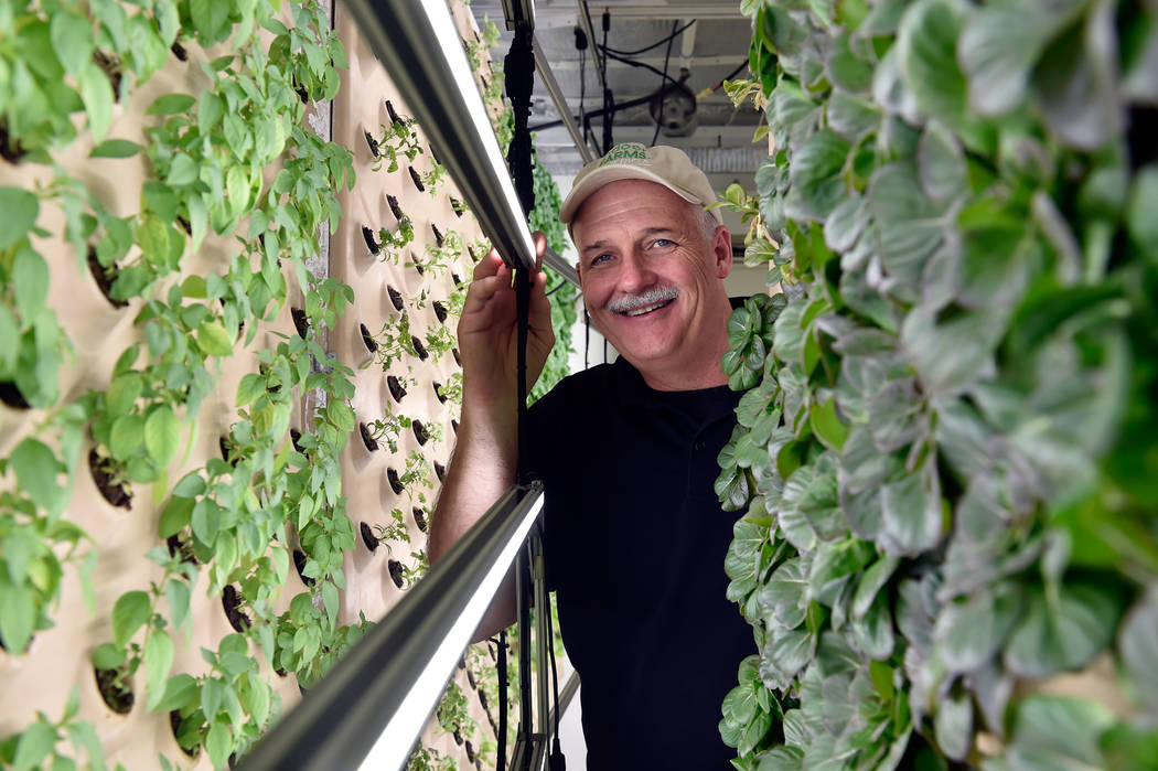 David Martin, CEO of Indoor Farms of America stands within his demonstration garden made with vertical aeroponic panels in his warehouse on Wednesday, June 6, 2018, in Las Vegas. David Becker/Las ...