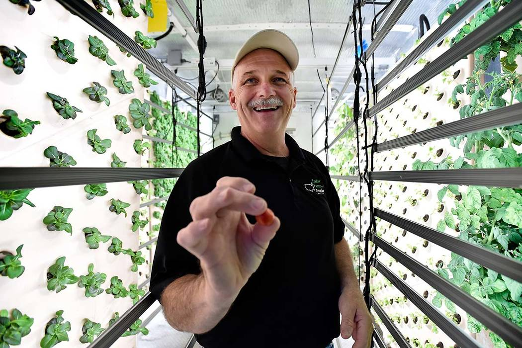David Martin, CEO of Indoor Farms of America offers a freshly picked cherry tomato from a plant grown on a vertical aeroponic panel at his warehouse on Wednesday, June 6, 2018, in Las Vegas. David ...