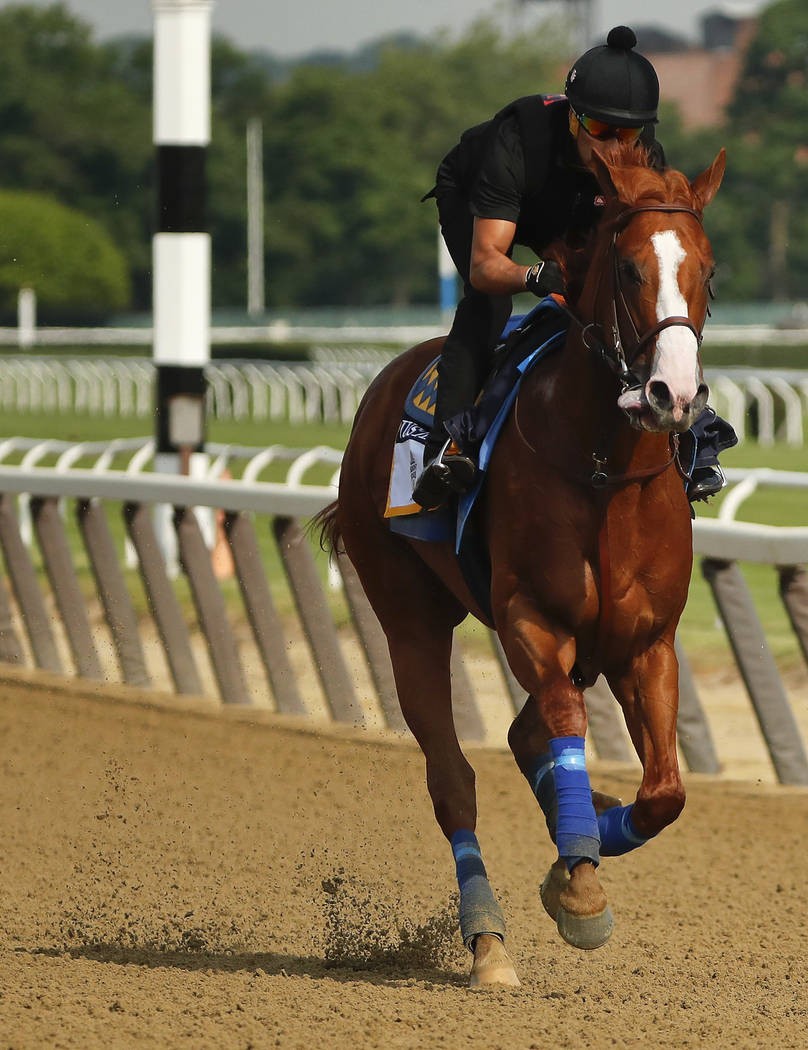 Triple Crown hopeful Justify gallops around the main track during a workout at Belmont Park, Friday, June 8, 2018, in Elmont, N.Y. Justify will attempt to become the 13th Triple Crown winner when ...