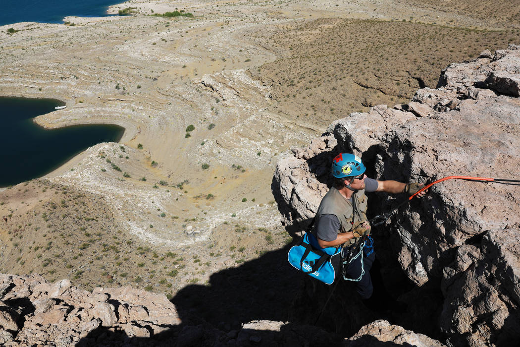 Joe Barnes, a biologist with the Nevada Department of Wildlife, climbs 50 feet down to collect peregrine chicks from their nest on a ledge overlooking Lake Mead in Temple Bar, Ariz., on Wednesday, ...