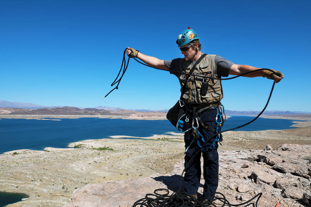 Joe Barnes, a biologist with the Nevada Department of Wildlife,prepares to climb 50 feet down to collect peregrine chicks from their nest on a ledge overlooking Lake Mead in Temple Bar, Ariz ...