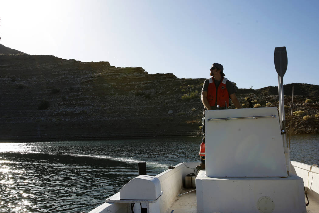 Joe Barnes, a biologist with the Nevada Department of Wildlife, drives a boat towards a ledge with peregrine chicks in Temple Bar, Ariz., on Wednesday, May 16, 2018. Barnes weighed and measured ea ...