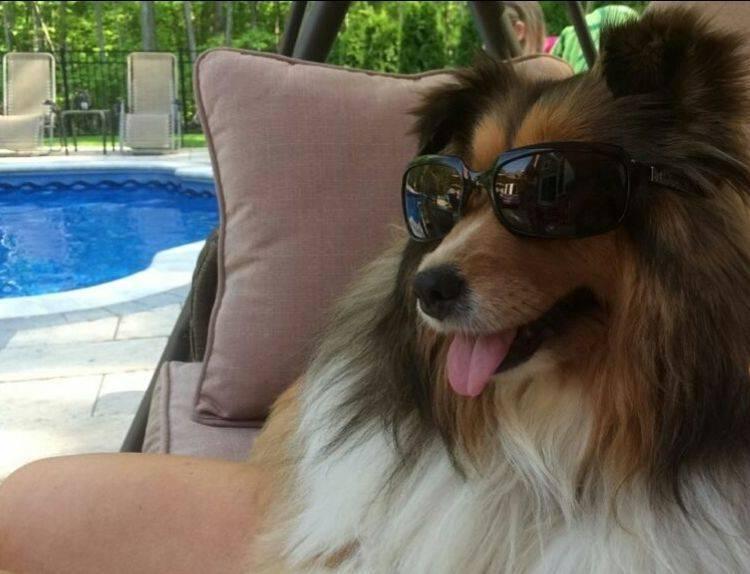 GMJ Interiors Make your backyard pet-friendly.