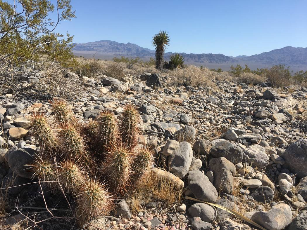 Lennar Corp., Shea Homes and Woodside Homes said they acquired 630 acres of land in the northwest Las Vegas Valley. The project site, between U.S. Highway 95 and Skye Canyon Park Drive, is seen Fr ...