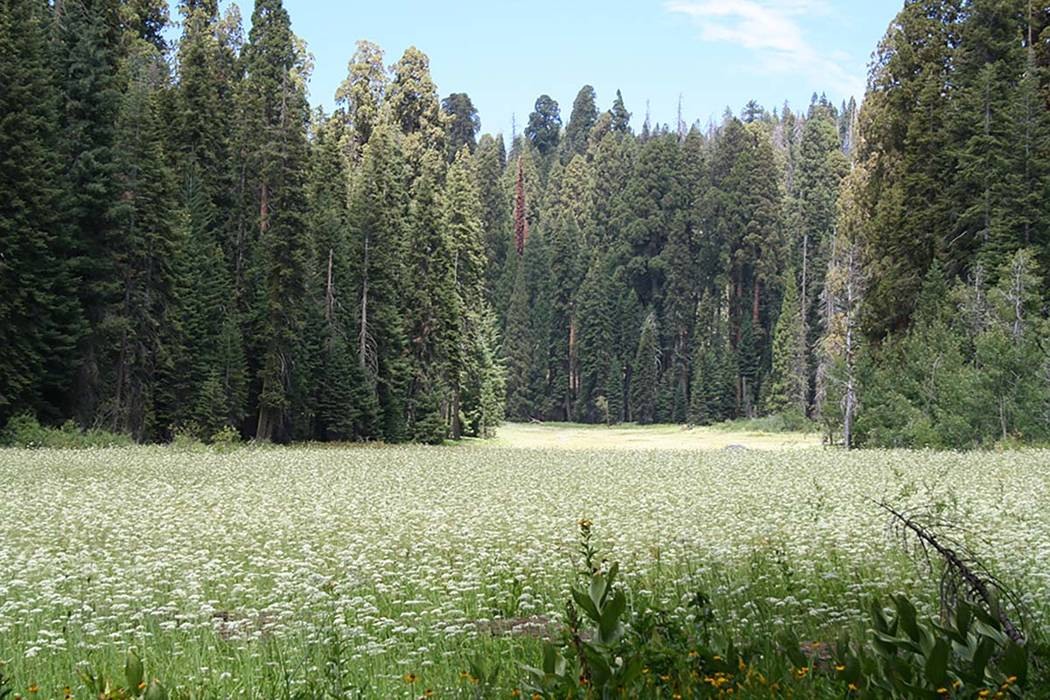 "Crescent Meadow is often carpeted with wildflowers in summer. John Muir coined the nickname of this meadow, ""The Gem of the Sierra."" (Deborah Wall)"