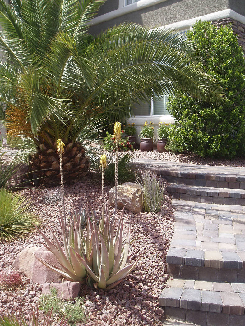 SNWA Award-winning desert-friendly xeriscape landscaping is shown at this Southern Nevada.